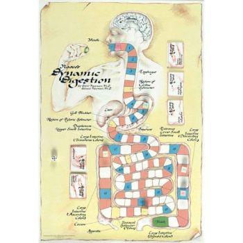 Digestive System - PurposeGames