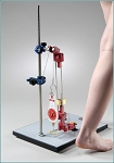 Biomechanical Leg Kit