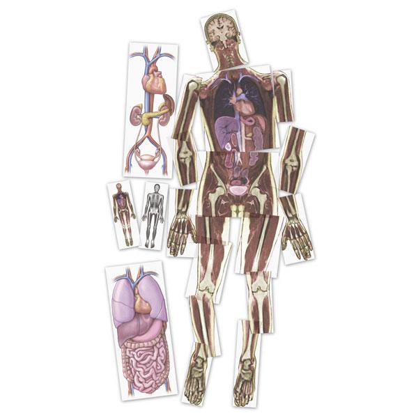 Human Anatomy Images Mri Scan