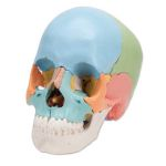 Beauchene Skull (Bone Colored, 22-Part)