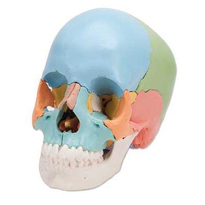 head first sql brain pdf