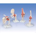 Deluxe Functional Knee Joint