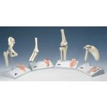 Mini Knee Joint with Cross Section & Base