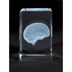 MEDart Glass Blocks Brain