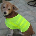 One Size Fits All Dog Safety Vest