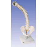 Flexible Spine with Foam Discs with Soft Intervertebral Discs
