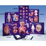 Female Reproductive System Model Activity Set