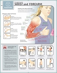 STRENGTHENING THE WRIST & FOREARM CHART PAPER