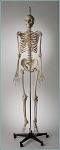 PREM SPECIAL EDITION SKELETON-HANG UP MOUNT