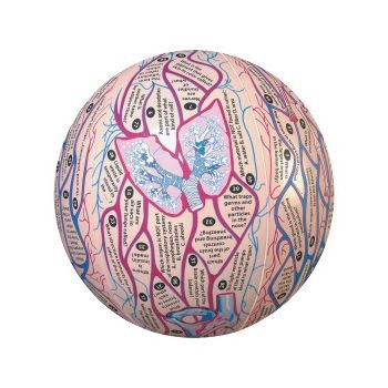 Clever Catch Anatomy Ball