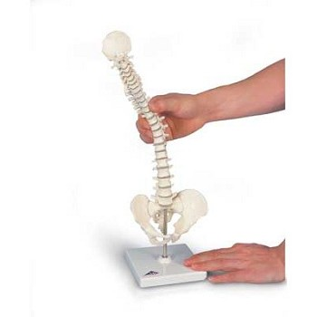 Mini Vertebral Column (Flexible, On Stand)
