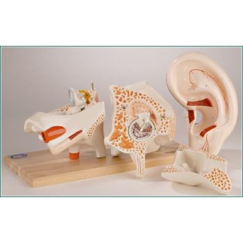 Deluxe Ear (8 Parts)