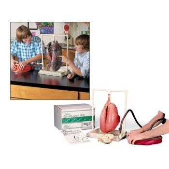 BioQuest Inflatable Lung Comparison Kit