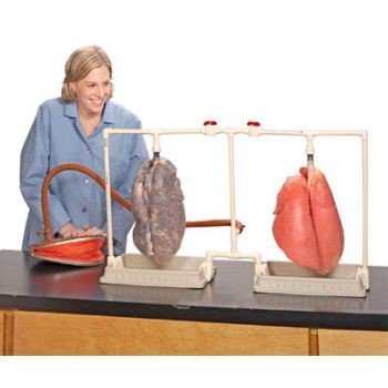 Dual Lungs Comparison Kit