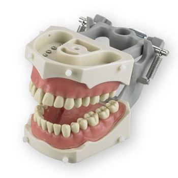 SM-PVR-860 (Articulated Dentoform® with 32 removable teeth and soft vinyl gingival facings and spring-joint articulator (replacemnt)
